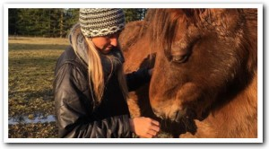 Equine Massage - Port Townsend and Jefferson County